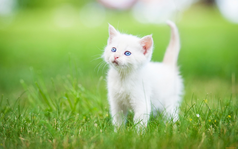 Картинка на стол белый кот цена
